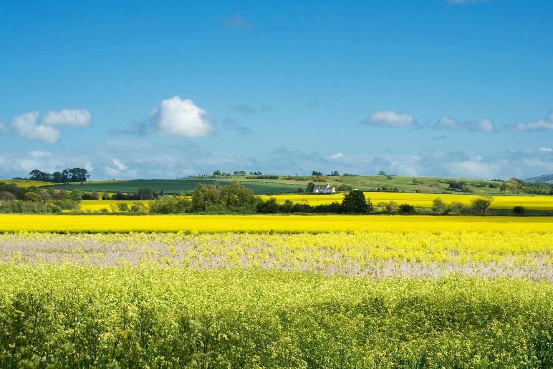 Schottische Landschaft - Lowlands, Felder