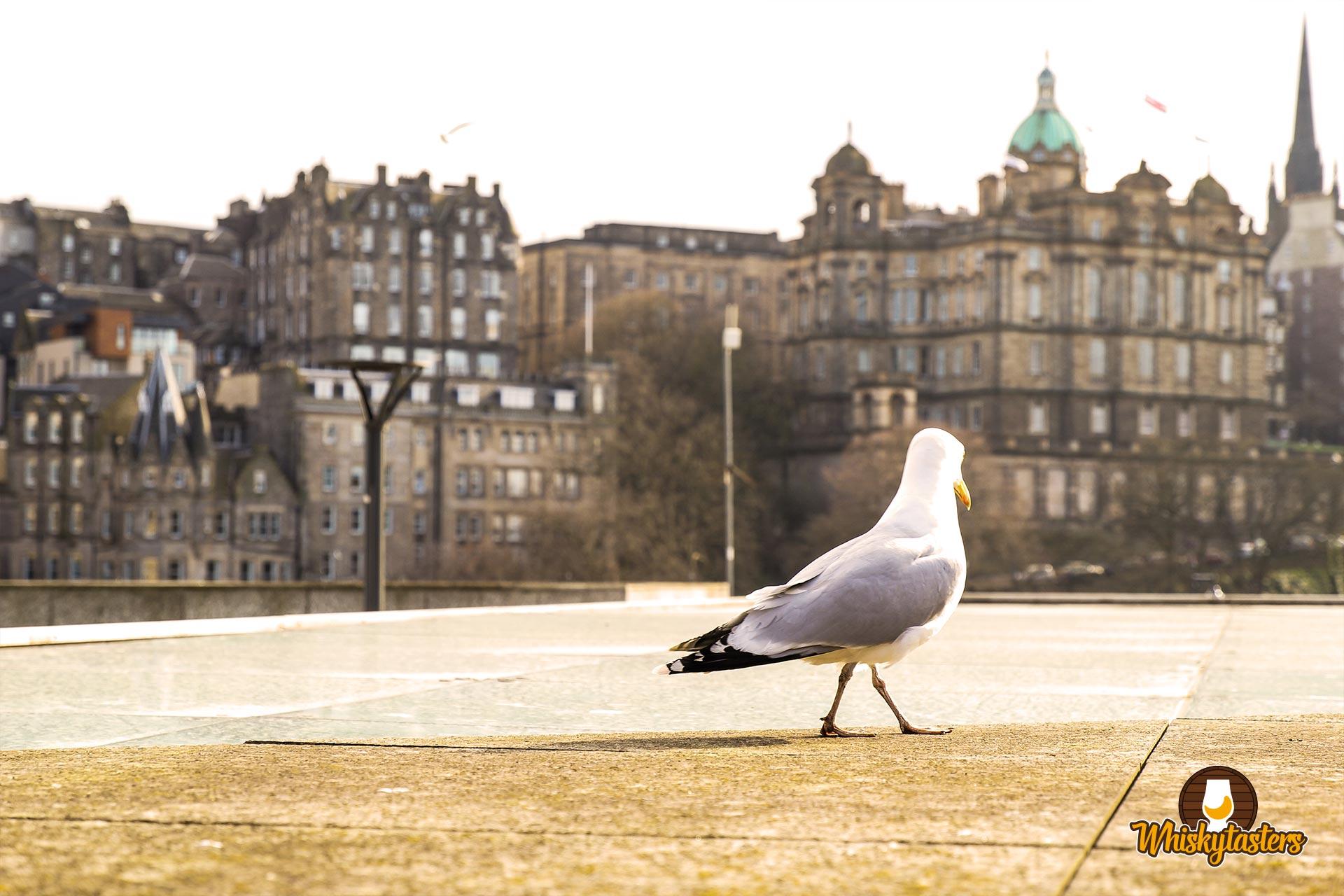Auf dem Weg durch die Stadt Edinburgh
